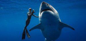 Дайвер с акулой