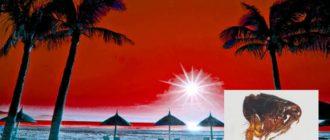 Песчаные блохи – малюсенькие, но представляющие собой угрозу простейшие