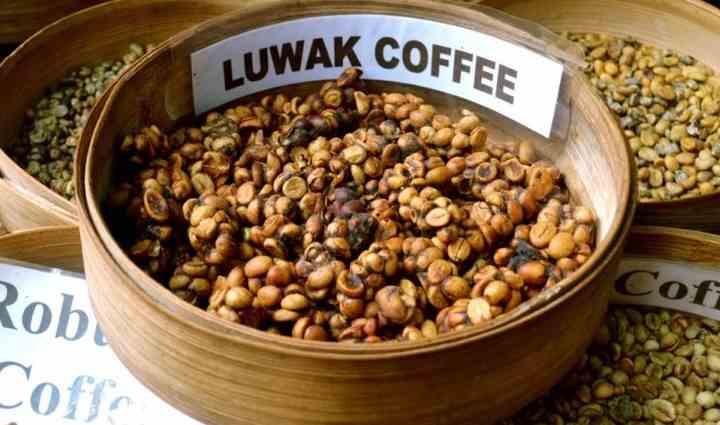 Кофе из какашек
