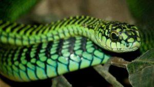 Список опасных рептилий